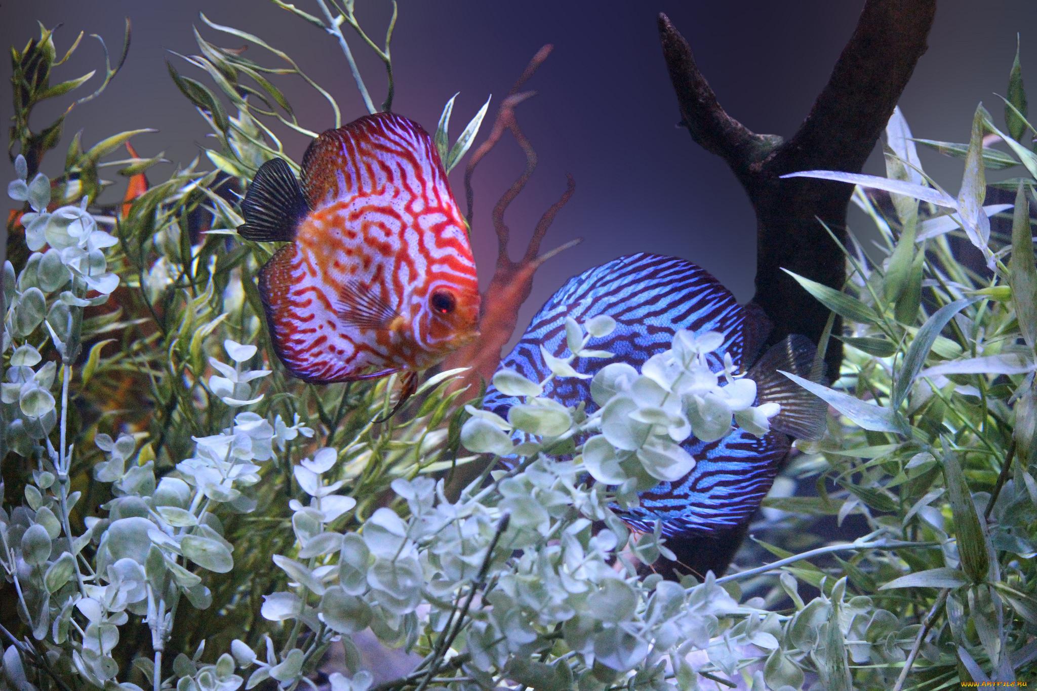 цветы картинки с рыбками коломна является одним